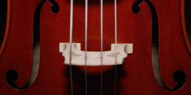 Up-close view of a stringed musical instrument